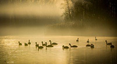 A nap képe: Ködfürdő