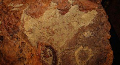 110 millió éves lábnyomokat találtak a Goddard Űrközpont parkolójában
