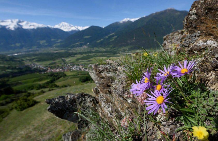 A klímaváltozás vesztese lehet a magashegyi növényzet