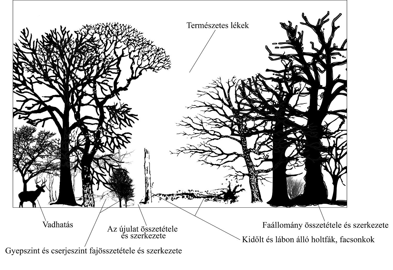 meghatározza a szén-dioxid-biológiát