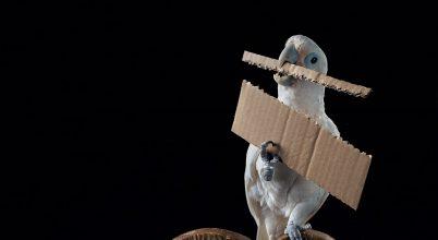 A madarak okosak