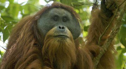 Sokkal több emlősfaj van, mint eddig hittük
