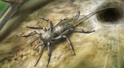 Borostyán őrizte meg egy 100 millió éves pók maradványait