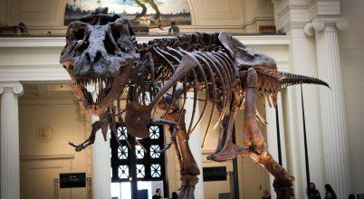 Sikerességük okozhatta a dinoszauruszok vesztét