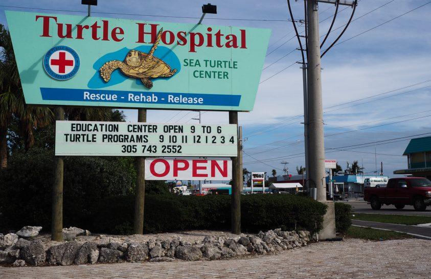 A világ egyetlen államilag elismert, akkreditált teknőskórháza