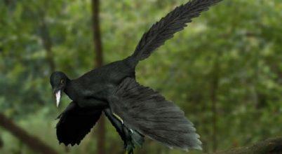 Fácán módjára repült az Archaeopteryx