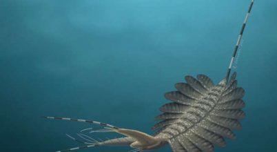 520 millió éves állatok agymaradványaira bukkantak