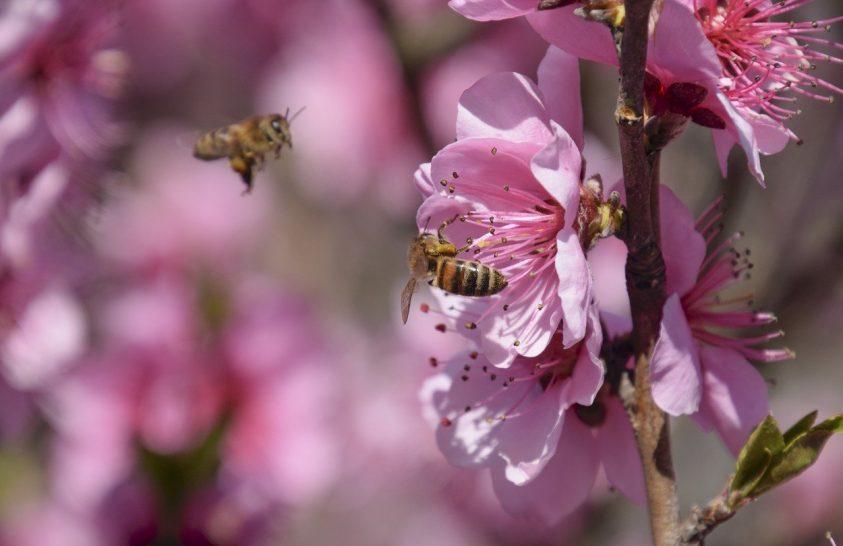 Méheket érintő veszélyekre figyelmeztet a beporzók napja