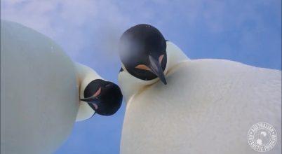 Pingvinszelfi