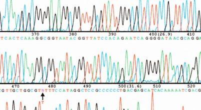 Újabb előrelépés a fehérjekutatásban