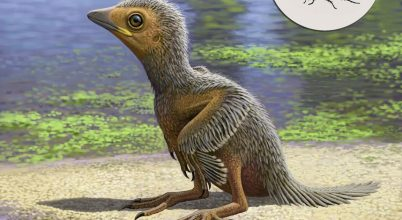 A madarak evolúciójáról árulkodik egy 127 millió éves fióka
