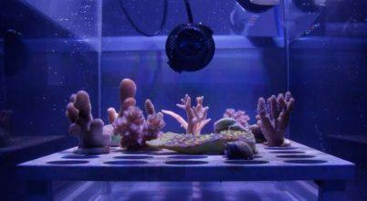 Napernyővel óvnák a Nagy-korallzátonyt