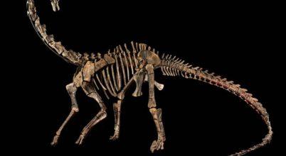 A 12 méteres Diplodocus is lehet a lakás dísze