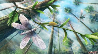 200 millió éves pillangók színét rekonstruálták
