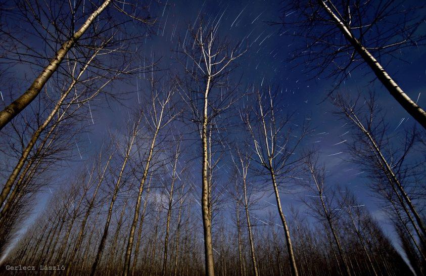 A nap képe: Hold világítja be a nyárfaerdőt