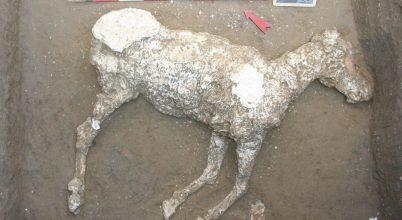 Futás közben ölte meg a lovat a Vezúv