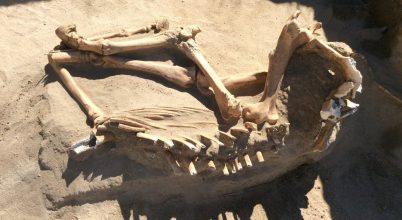 Jégkorszaki lócsontváz került elő egy családi kertben