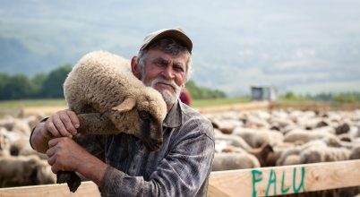A nap képe: Pünkösdi bárány
