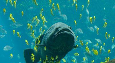 3000 kilométerről vonzza a trópusi halakat az új-zélandi hőhullám