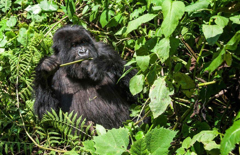 Év végéig zárva lesz a kongói Virunga Nemzeti Park