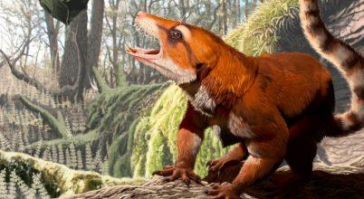 Eddig nem ismert, ősi emlősfajt fedeztek fel