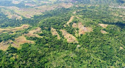 Globális tragédiához vezethet az őserdők eltűnése