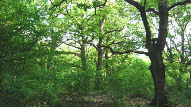 Százéves erdők Magyarországon