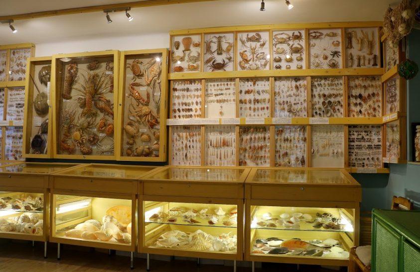 Egy különleges gyűjtemény Debrecenben