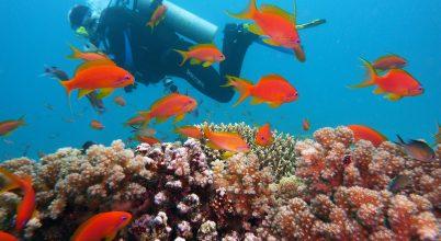 Korallzátonyok nélkül a tengerpartok is védtelenné válnak
