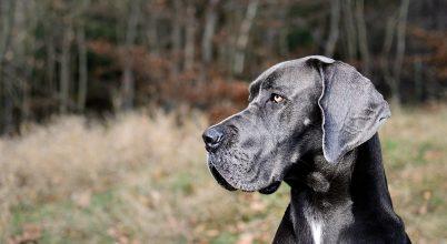 Kiderült, hogy hogyan lett a kutya az ember legjobb barátja
