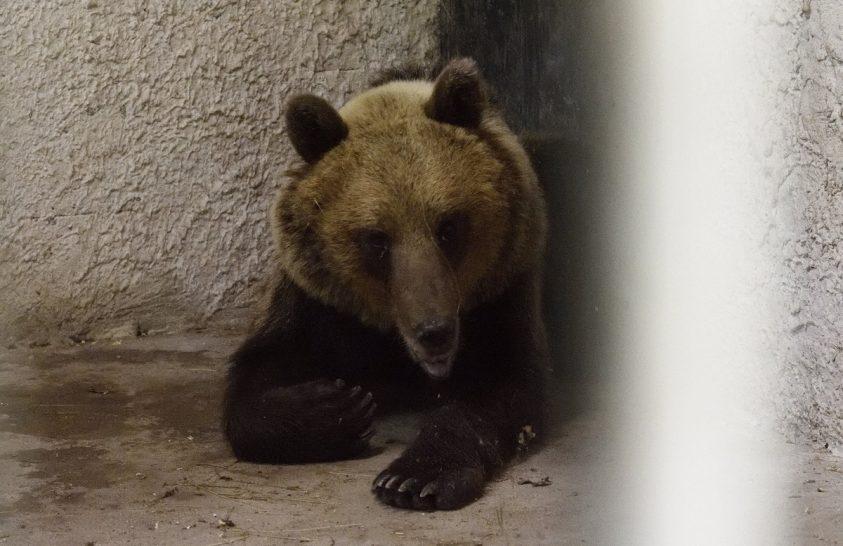Magyarországi medvekaland