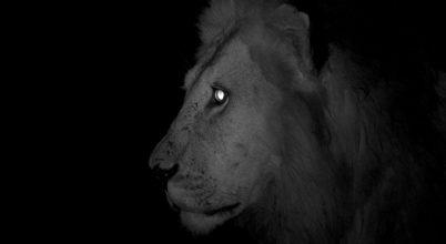 Egyre több állat válik éjszaka aktívvá miattunk