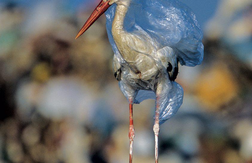 A műanyag: állatokat gyilkol