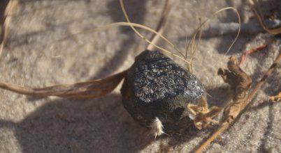 Megtalálták a Botswana felett felrobbant aszteroida egy darabját