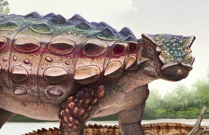Új páncélos dinoszauruszfajt azonosítottak ausztrál kutatók