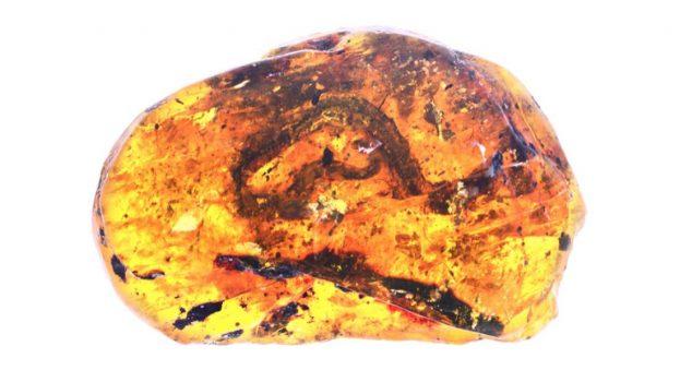 Kígyóbébit találtak egy 99 millió éves borostyánban