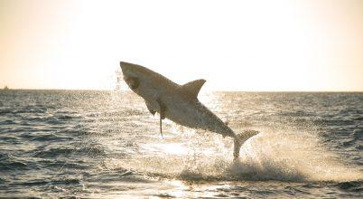 Júliusban ismét jön a Cápafesztivál!