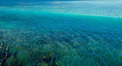 A korallpusztulás közvetett okozói