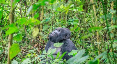 Komoly veszélyben van Afrika két nemzeti parkja