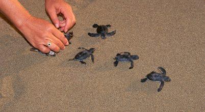 Megmenekülhetnek a teknősök Cipruson