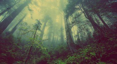 Valamivel jobb az erdők helyzete, mint eddig hittük