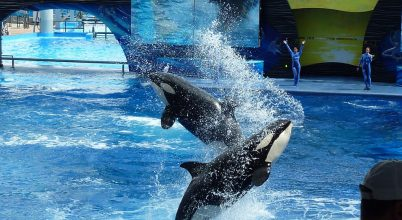 Így áll ki a kardszárnyú delfinekért egy brit utazási iroda