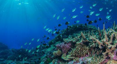 Megváltozott a Nagy-korallzátony élővilága