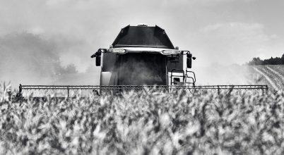 A nap képe: Repce aratása