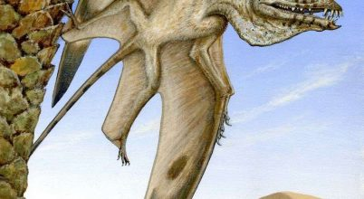 Ősi repülő bestia maradványaira bukkantak