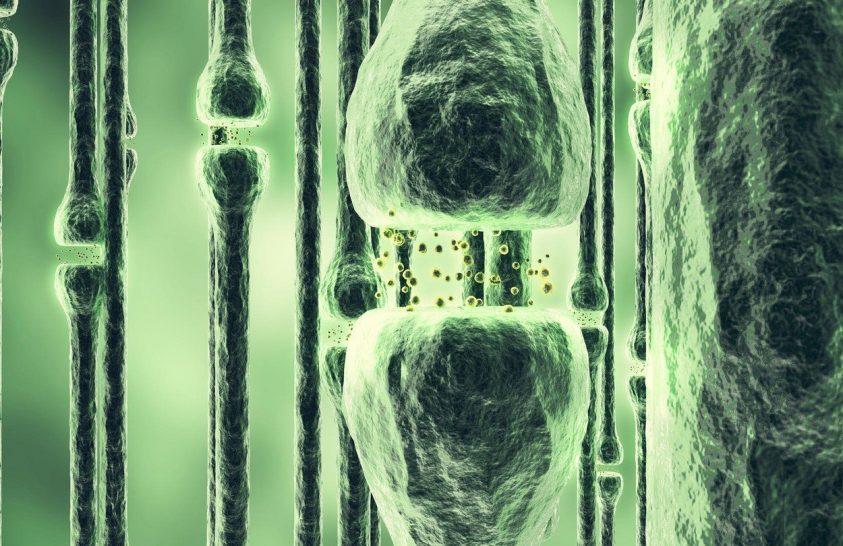 Hogyan programozhatják át emlékeink az idegsejtek kommunikációs gépezetét?