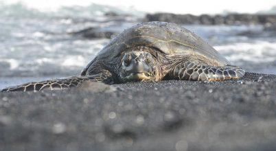 Valami nagyon aggasztó történik a mexikói teknősökkel