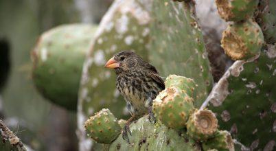 A távoli szigeteken több az idegenhonos faj