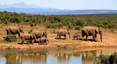 Közel száz elefánttal végeztek Botswanában