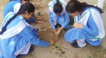 Tízmilliárd fát akarnak elültetni Pakisztánban